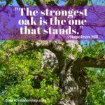 Hill oak tree